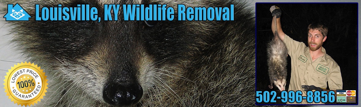 Louisville Wildlife and Animal Removal